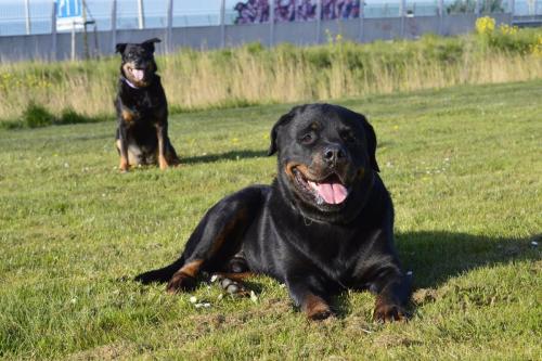 Rico & Roxy