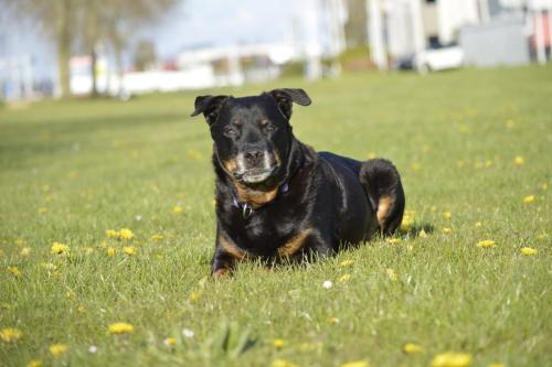 Roxy 12 jaar