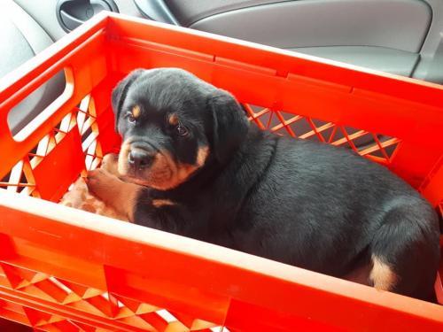 Isa onderweg naar haar nieuwe huisje!