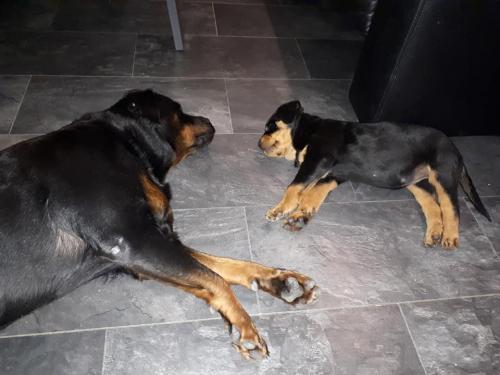 Bibi & Isa