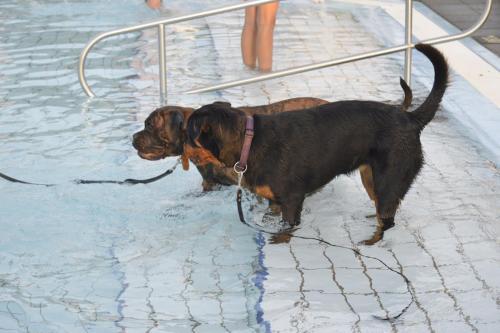 Hondenplons (13-09-2021)