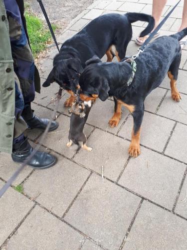 Binck & Isa met Chihuahua pupje Taxi
