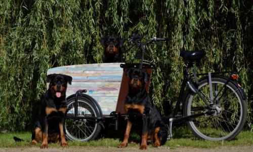 Isa, Binck & Theo in de bakfiets