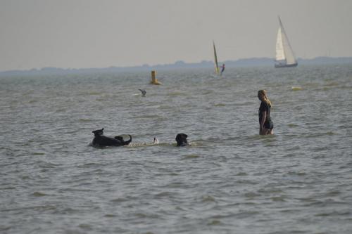 Met de hondjes zwemmen
