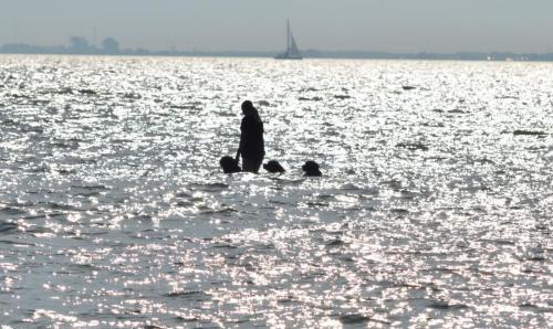 Met de hondjes zwemmen (09-09-2021)